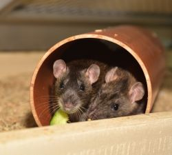 Top Tips to Preventing – and Addressing – a Rodent Infestation in Your Property