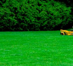 Tips For Hiring A Lawn Care Specialist