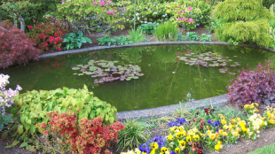 A-Fine-Formal-Pond