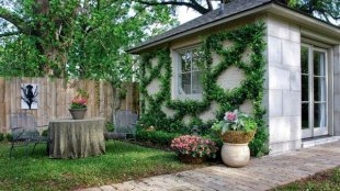 climbing-plants-with-shapes-on-house-wall